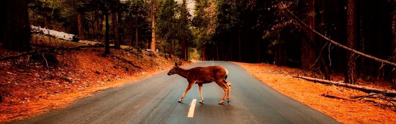 Cobertura en accidentes con animales salvajes