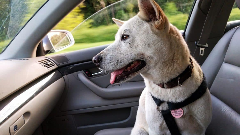 Consejos de seguridad si viajas con tu mascota en el coche
